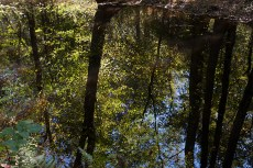 Great Dismal Swamp, Suffolk, VA, October 20, 2013